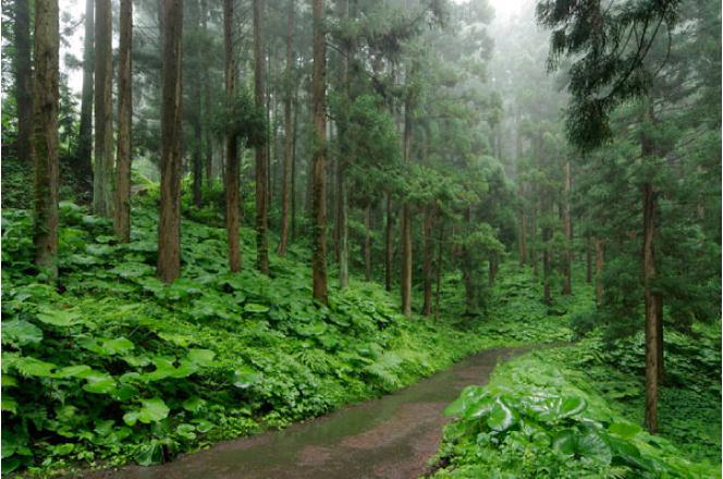 木材利用と森林破壊