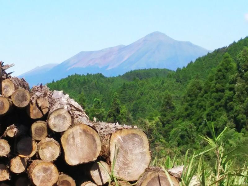 安心できる木材